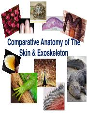 Lec2B_Skin and Exoskeleton_Summer2014.pdf