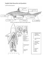 comparative anatomy lab dogfish 2