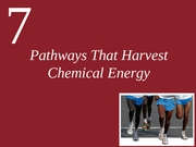 Ch7-Harvesting Chemical Energy