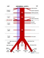 Circulatory system-Aorta and it%2527s tributaries (2).docx