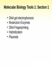 Topic 6- Molecular Biology Tools _Spring 2014