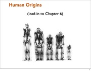 Lect 20 Oct 28 Human Origins (posting)