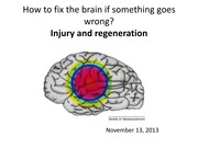 Lecture 18 injury and regeneration 2014