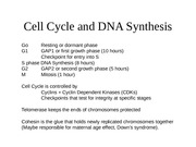 Lecture 19 DNA Cell Cycle.ppt