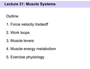 Slides 21 - Muscle systems