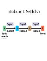 7-Introduction to Metabolism-STUDENTVERSION.pptx