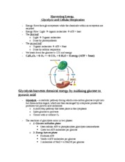 Glycolysis and Cellular Respiration Notes