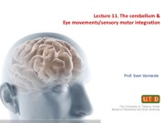 Lecture 11. Cerebellum and Eye Movements