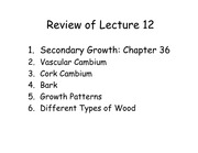 Lecture13%20Transport%20in%20Plants