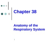 Chapter 38 Anatomy of Respiratory System