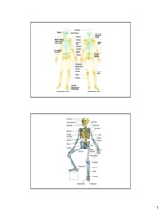 Chapter 7_The Skeletal System