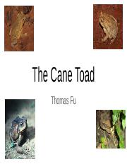 The Cane Toad.pptx