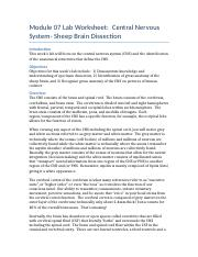 module 08 case study cns movement disorders essay The nervous system is formed by the sensory nerves that have 43 pairs connecting the central nervous system  anatomy movement  the cns or in the case of.