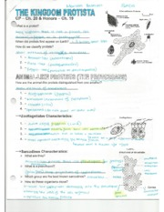 Biology Protista Kingdom Guided Notes