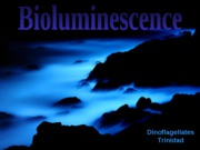 013-Bioluminescence
