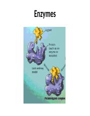 Chapter 6-Enzymes.ppt