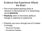 Brain_Part3_Plasticity