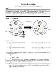 cellular respiration worksheets for high school cellular best free printable worksheets. Black Bedroom Furniture Sets. Home Design Ideas