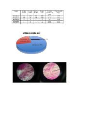 ap bio mitosis lab data.docx