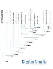Kingdom_Animalia_Cladogram.pdf