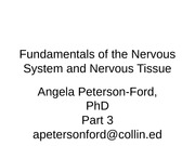 Chapter 11 Part 3 Fundamentals of CNS