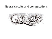 Lecture 11 Neural circuits and computations.pdf