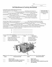 4 Pages Cell Membrane And Tonicity Worksheet Pdf