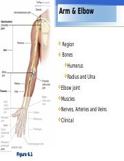 Lecture 7 - Arm & Elbow.ppt