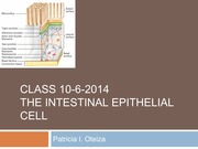 Class+Intestinal+epithelial+cell+10-6-14