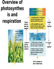 Copy of Photosynthesis-I-revised