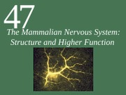 Ch47 Lecture-The Mammalian Nervous System