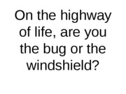bug windshield