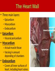 The Cardiovascular_System.pptx