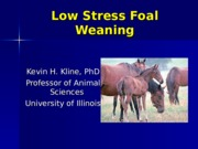 Low Stress Weaning of Foals0 (1)