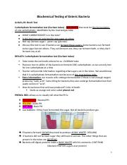 Copy of Biochemical Testing of Enteric Bacteria