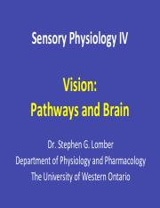 Sensory+4+-+Vision+-+Pathways+and+Brain