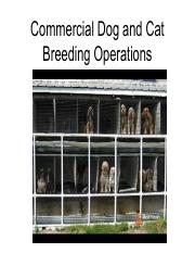Commercial Cat and Dog Breeding Operations