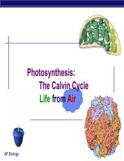 Calvin_Cycle_and_CAM_plants