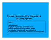 Topic 14 cranial nerves and ANS presentation