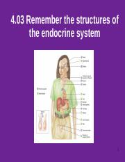 4.03_Remember_the_structures_of_the_endocrine_system_.ppt
