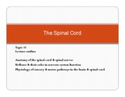 Topic 11 spinal cord PRESENTATION 2009