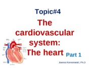 ANP 1105 The Heart Pt. 1