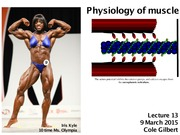 Lec 13 - Muscle Physiology