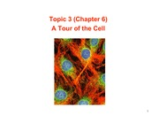 Topic 3 - Cell Structure S10 1pp
