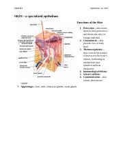 Skin and Epithelial Tissue (lecture 3).docx