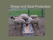 Sheep lecture