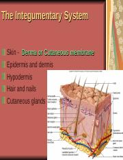 integumentary system class notes.ppt