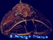 Deep Sea (aphotic)