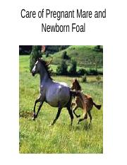 Care of Pregnant Mare and Newborn Foal(2)