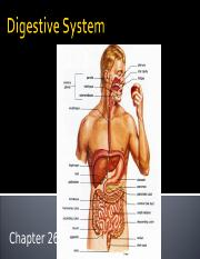 Chapter 26 Lecture Outline (Digestive System).ppt